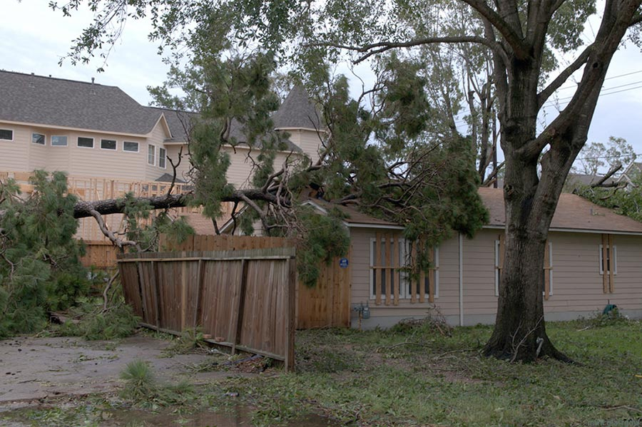 Tree Damage from not using tree service correctly. Lawrence KS.