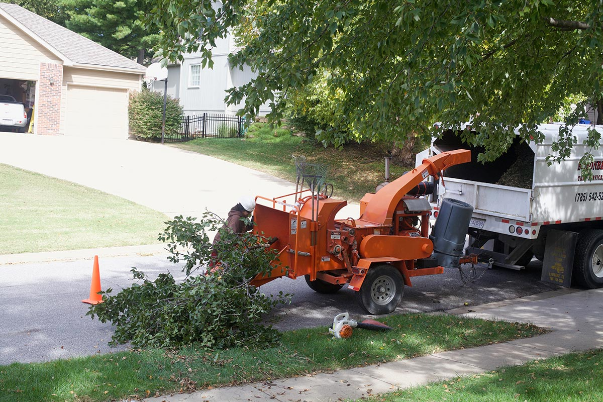Lawrence Kansas Tree Service and Maintenance